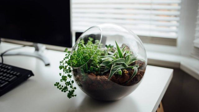 http://newstar.bold-themes.com/how-to/wp-content/uploads/sites/10/2018/01/balloon_planter-640x360.jpg