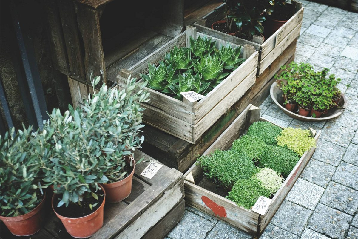 How to have modern garden