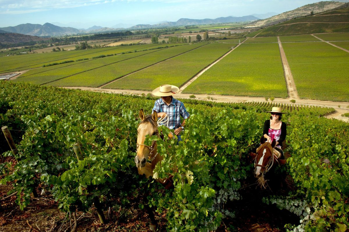 The Best Wine Tours in Chile