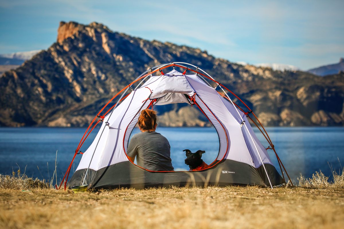 8 Essential Tips for Camping with Your Dog