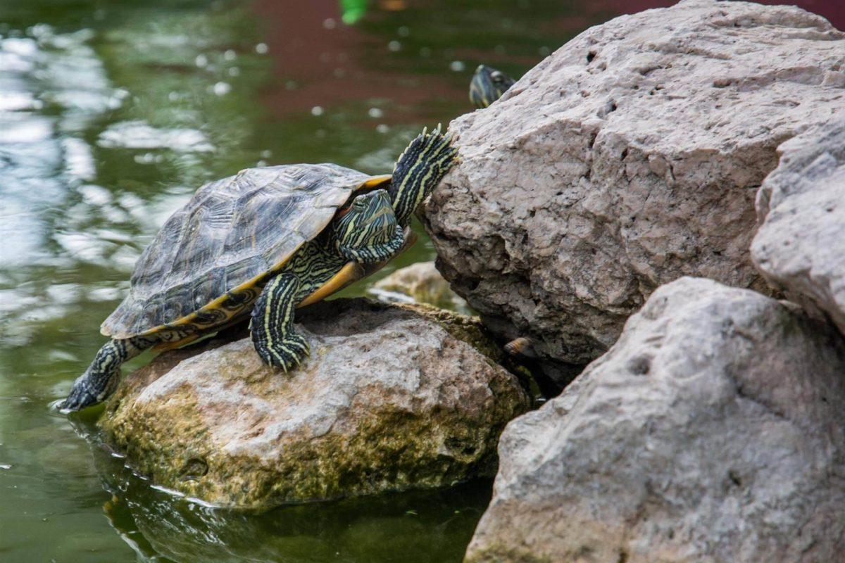 Exotic Animal Care In San Francisco – Tourtois Needs